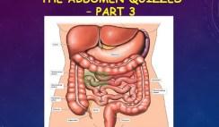 The Abdomen 3