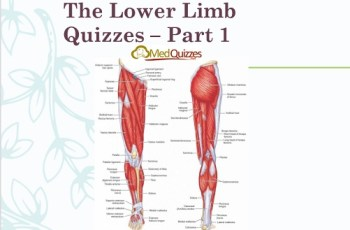The Lower Limb Quizzes – Part 1