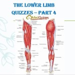 The Lower Limb Quizzes – Part 4