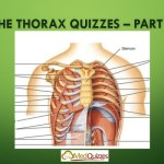 The Thorax 4