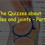 The Quizzes about Muscles and joints – Part 2