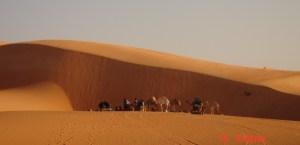 dune-chameaux