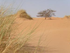 zarga_dunes-02