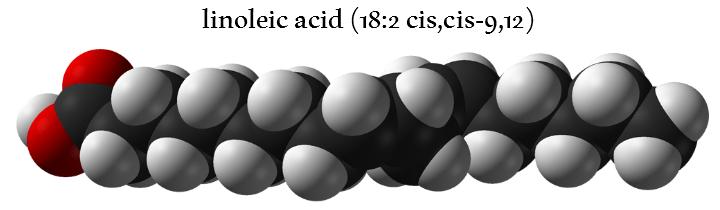 linoleic acid rev