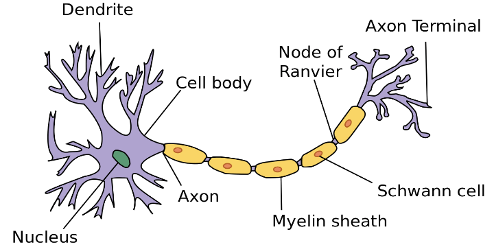 neuron rev