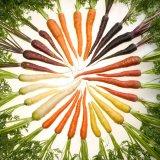 Photo of Лікувальні властивості моркви звичайної