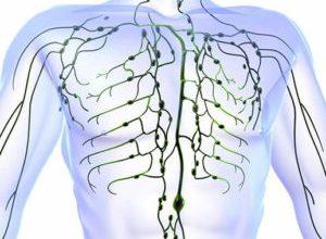 Photo of Як влаштована і на що впливає лімфатична система людини