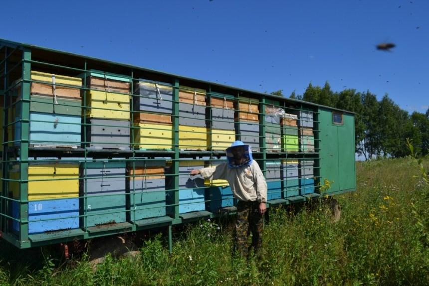 Выездная пасека в Нерехтском районе костромской области