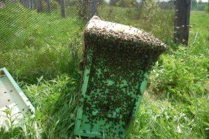 ловушка пчел