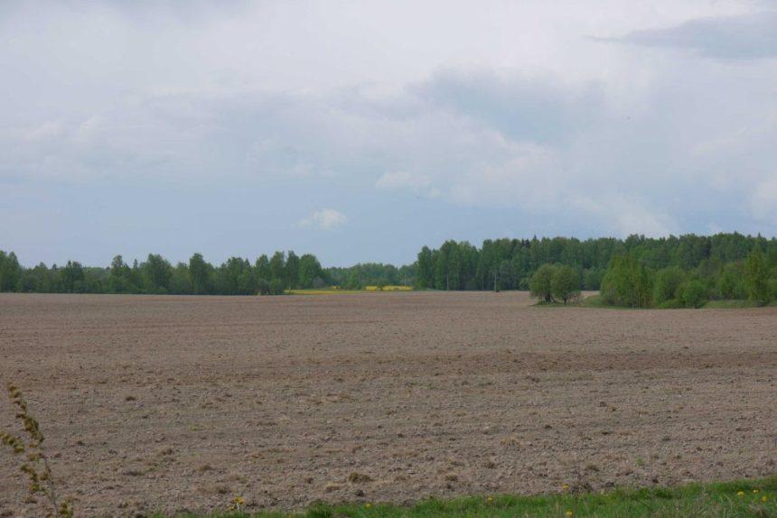 распаханные и цветущие поля в округе