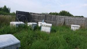 брошенная пасека в Костромской области