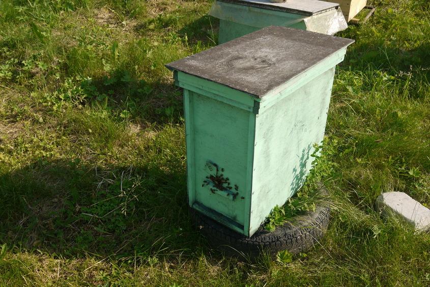 купить пчел в костроме