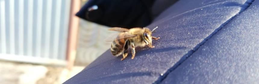 пчела на плече
