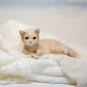 子ネコさん。羊毛フェルトの作品です。