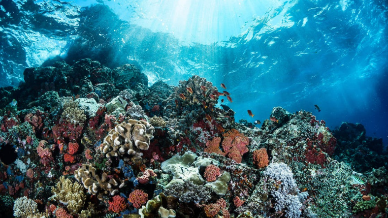 Deadly Coral Disease