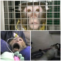 Animal Testing & Experimentation in Mauritius - Another blow for animals