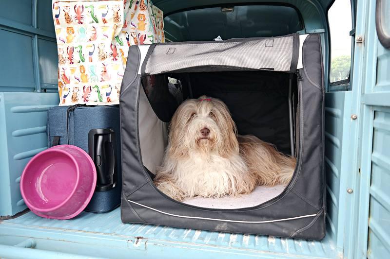 Hond Julchen en Acadiane Emilia op tournee