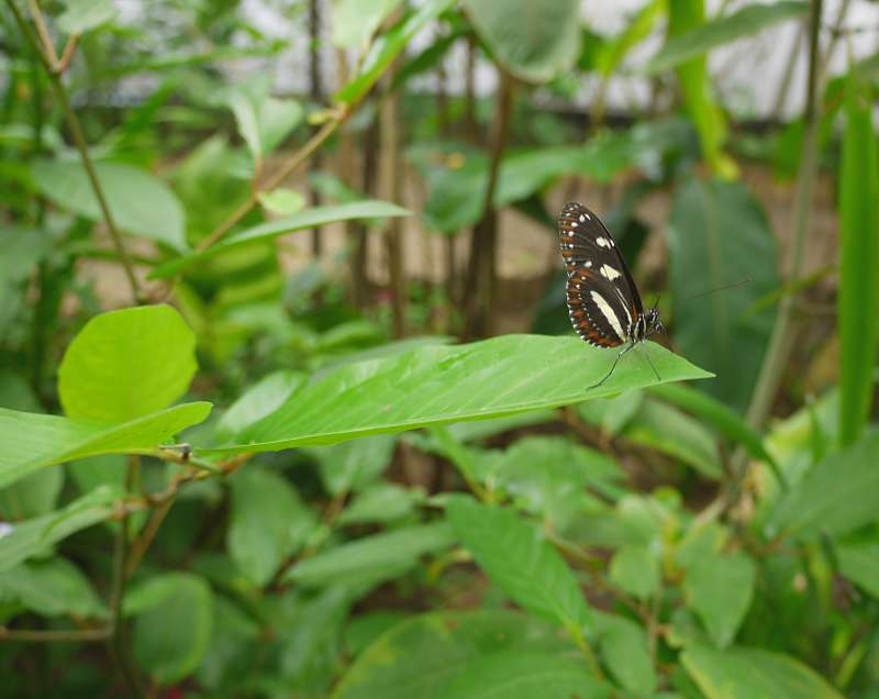 Bei den Schmetterlingen