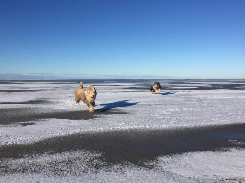 Hunde, Schnee, Strand