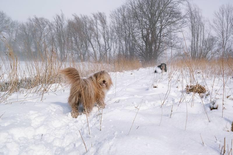 Winterstilte met sneeuw