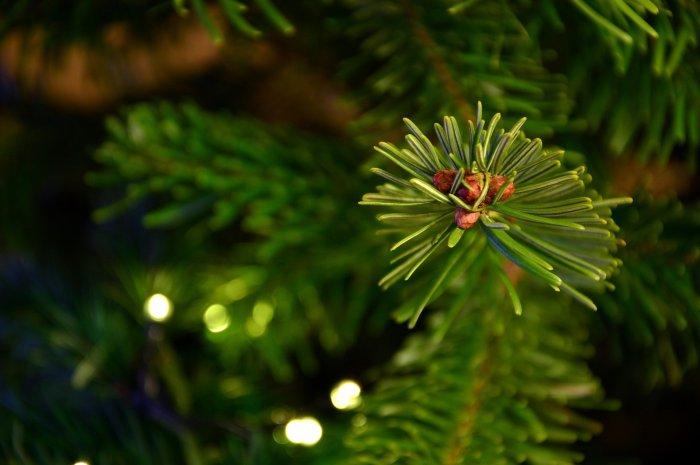 Weihnachtlich nachhaltig: Der Baum