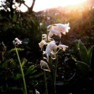 Bloemen in de ochtend