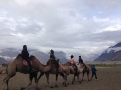 Camel riding in Nubra Valley