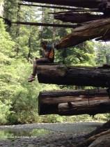 Redwoods hangout