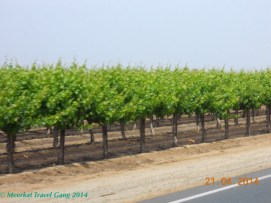We saw vineyards, plus groves of orange trees, lemon trees and clementine trees. They smell so good, even driving past.