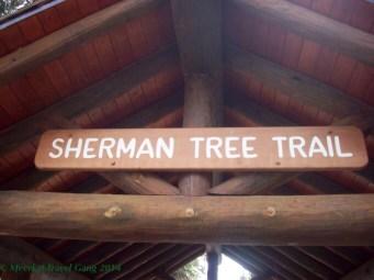 General Sherman tree & trail