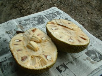 Jackfruit Opened This is a public domain image, uploaded by user Kinglaw