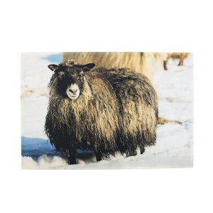 Deurmat dieren ijslands schaap