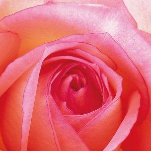 Servetten Rose 33x33