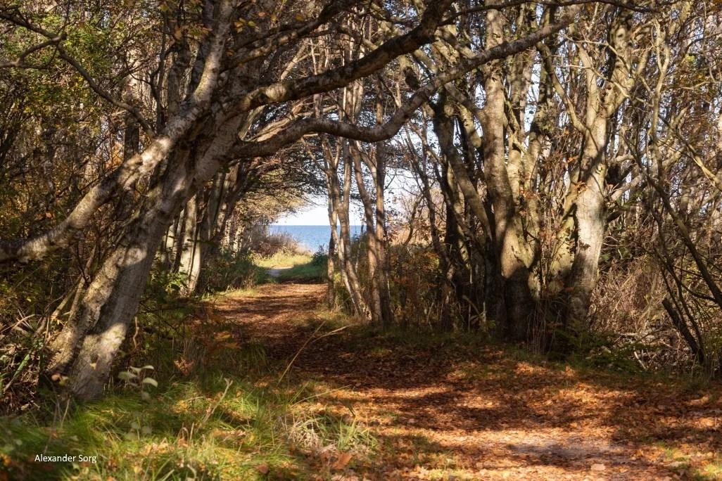 Storedal Strand Klitplantage