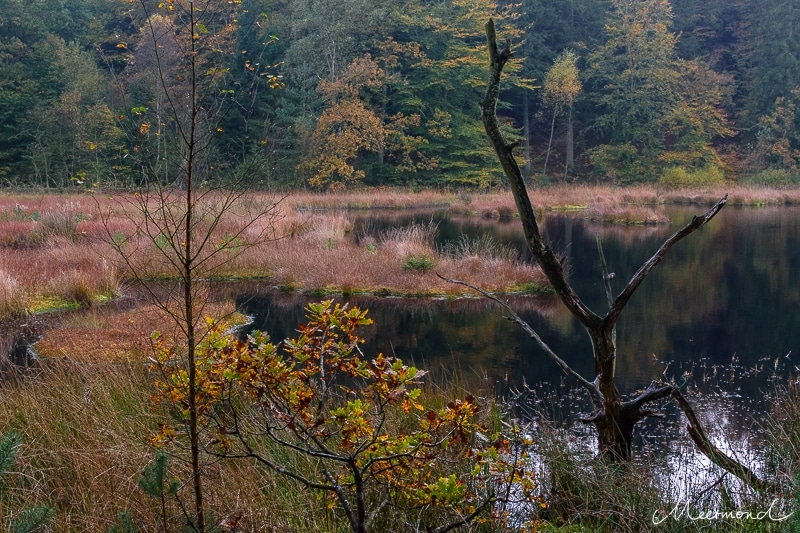 Dänemark Waldsee
