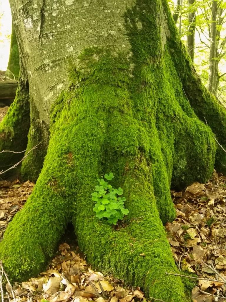Dänemark Wald Moos