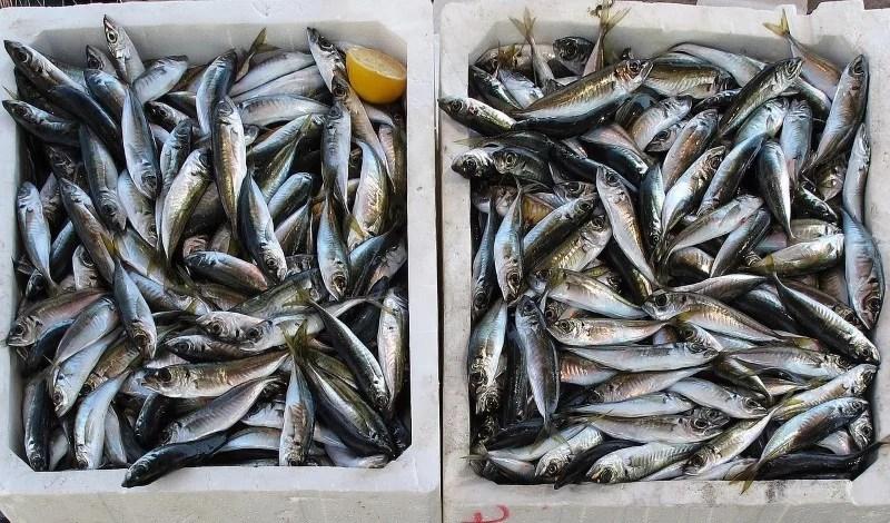 Fisch Überfischung Klimawandel