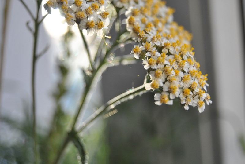 Kräuter Bjesk Hirtshals
