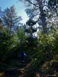 Aussichtsturm in der Tversted Klitplantage