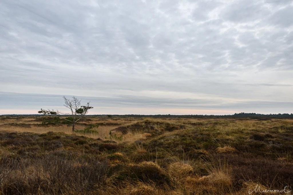 Heidelandschaft auf Rømø