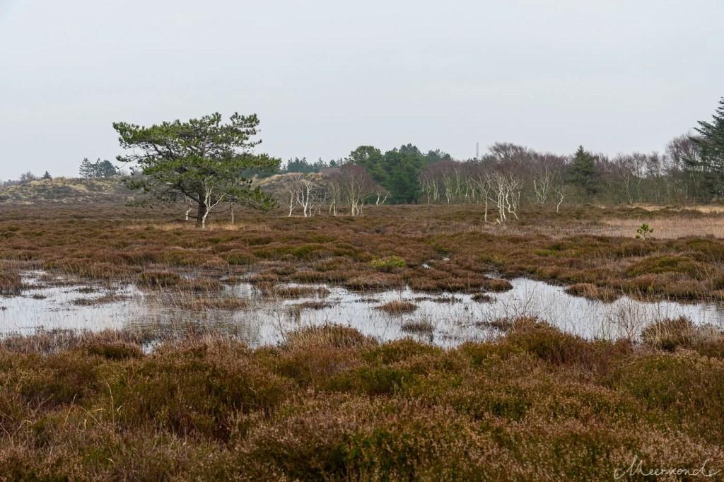 Landschaft auf Rømø im Winter