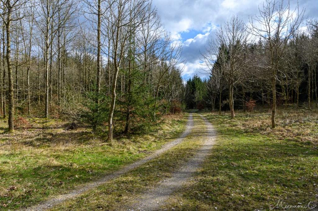 Gepflegter Waldweg