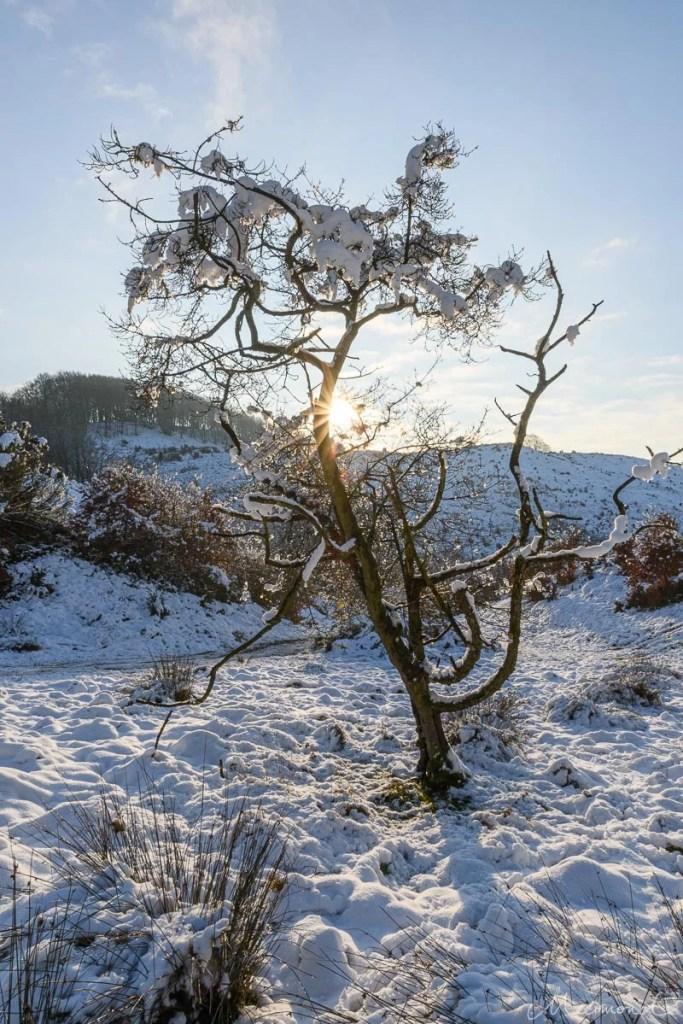 Schneebedecktes Bäumchen in Dänemark