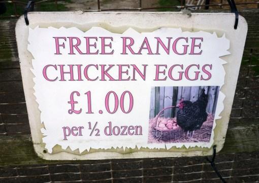 06 eggs2