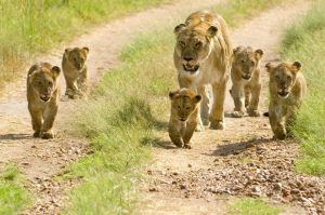 Tanzania targets conference and MICE tourists