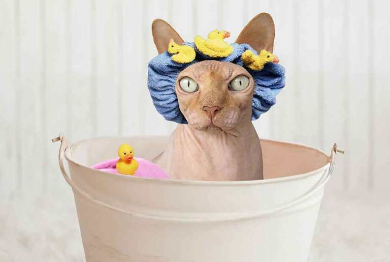 Shower-Cap-on-a-cat-Image-by-Digital-Photo-and-Design-DigiPD-Optimised