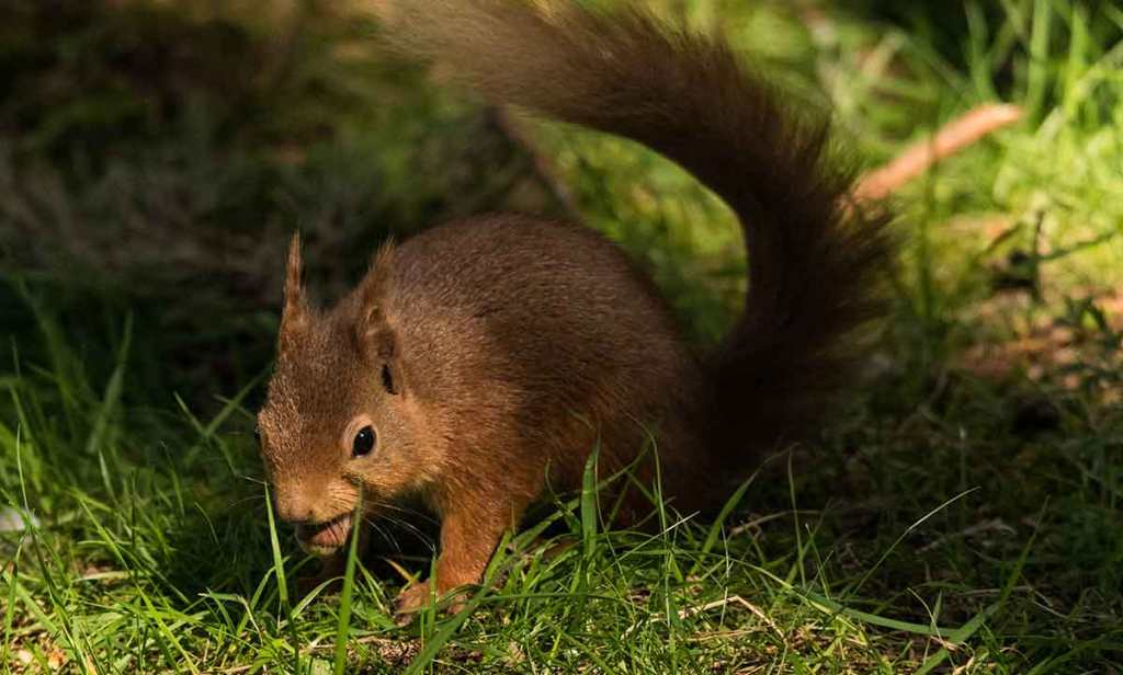 Squirreling-away-a-nut-Photo-by-Ramon-Vloon-on-Unsplash-Optimised
