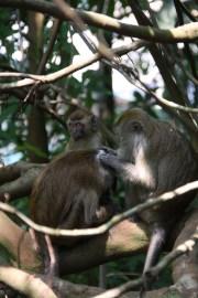 Wild monkeys (don't get bitten!)