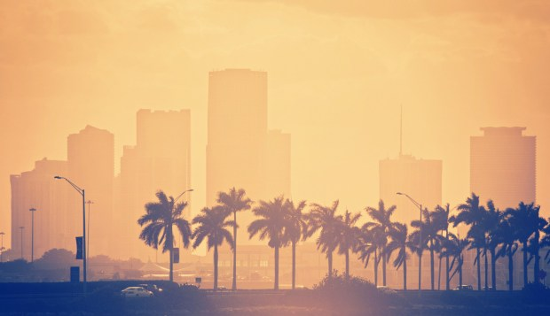 palm trees and skyline in miami