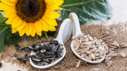 Sunflower seeds are a great snack of course, but did you know they are a superfood. Sunflower seeds are full of selenium which is a natural cancer fighter. They also have a lot of calcium making them good for your bones and teeth.